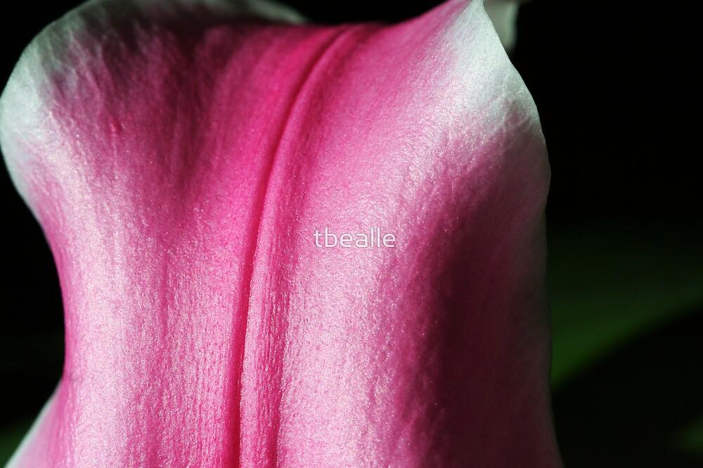 Pink Petal by Terri~Lynn Bealle