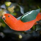 King Parrot by Gavin Brown