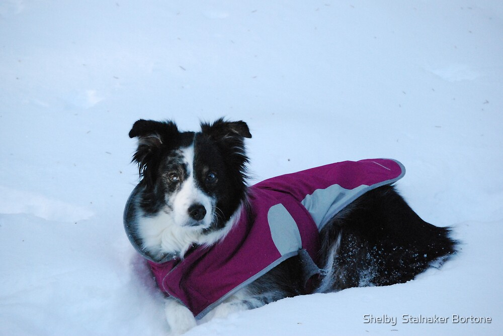 It is Cold out here by Shelby  Stalnaker Bortone