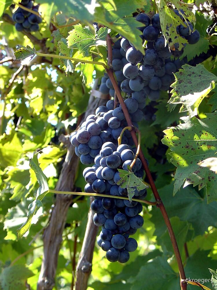Harvest by ckroeger