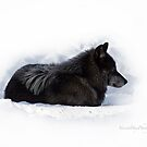 The Black Wolf Legend by Yannik Hay