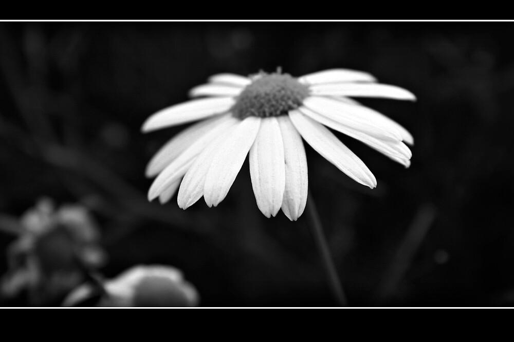 Little Daisy by Kardz4Kenya