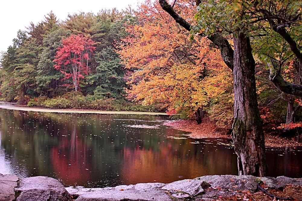 Autumn reflections by Linda Crockett