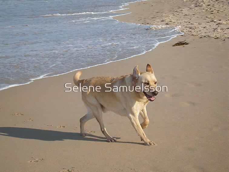 Beach Boy by Selene Samuelsson