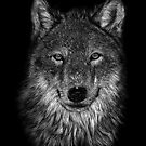 WOLF by IsabelSalvador