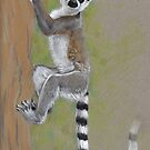 Lemur Babe by Teresewa