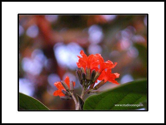 orange flower by prasad nagnath
