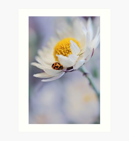 Ladybird and Daisy Art Print