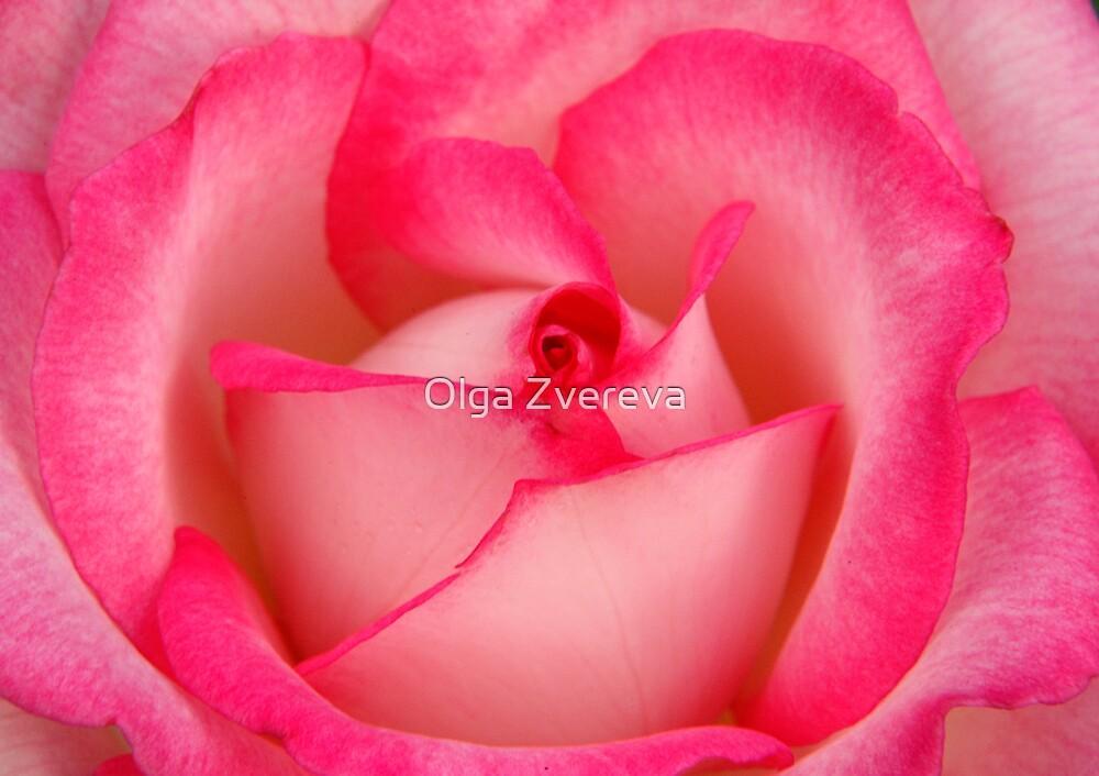 Pink Rose by Olga Zvereva