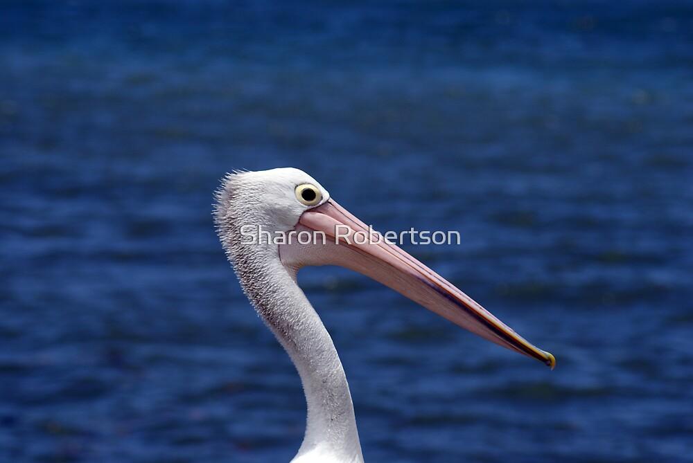 Pelican Portrait by Sharon Robertson