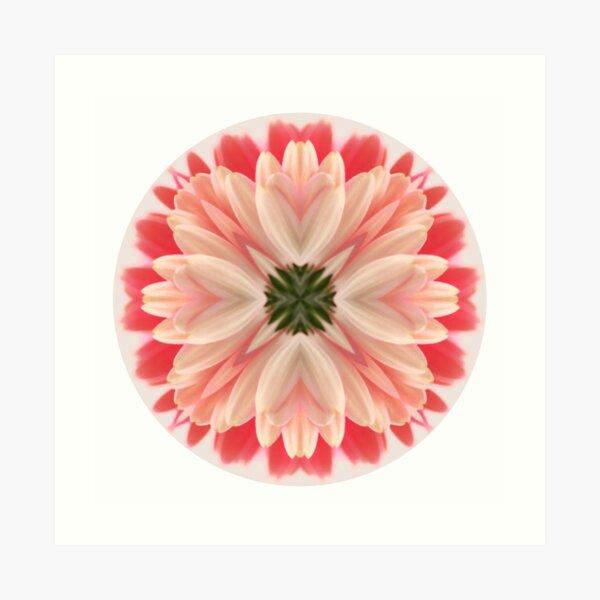 Pink Gerbera Mandala Art Print