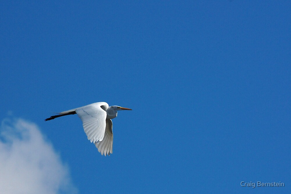Egret in Flight by Craig Bernstein