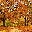 Walk with me by LudaNayvelt