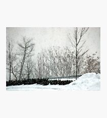The Weight of Snow Photographic Print