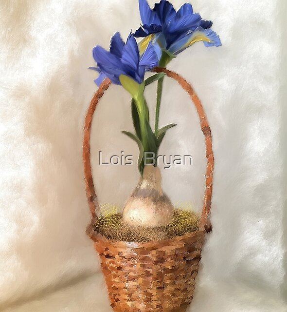 Plain Blue Iris by Lois  Bryan
