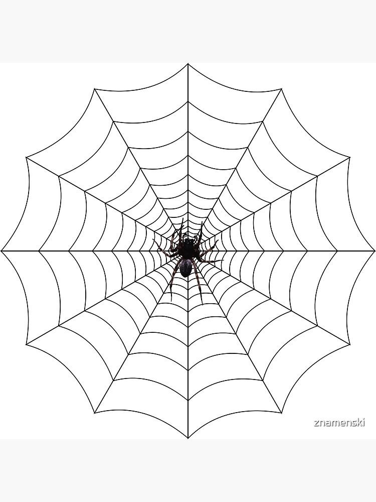 Spider web, spider, web, паутина, web, cobweb, net, tissue, spider's web, spinner, caterpillar by znamenski