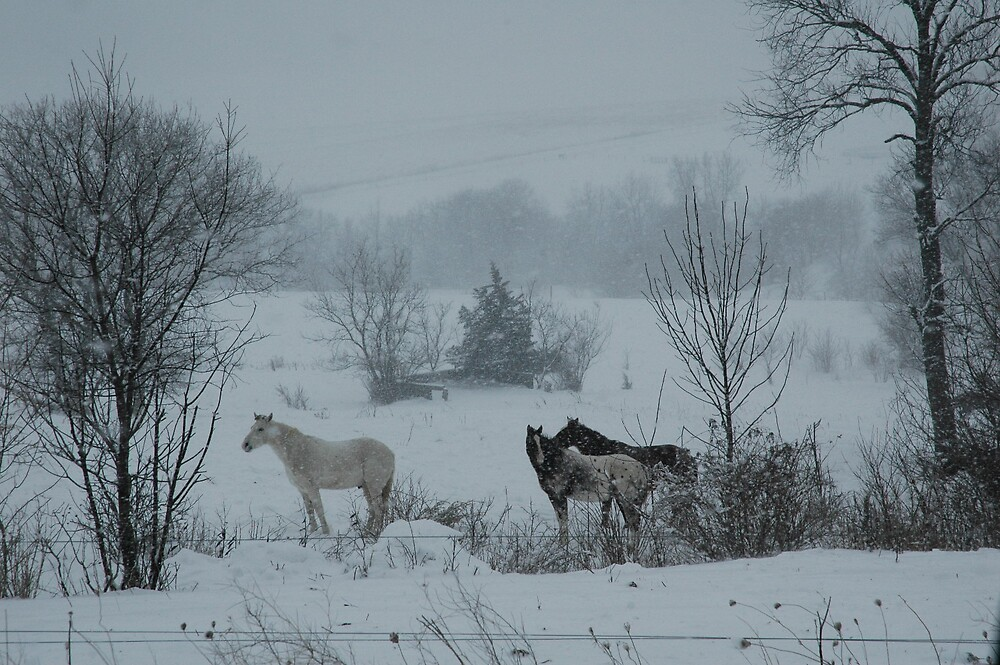 horses in snow by cynthia  brown