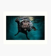 Dog Underwater Art Print