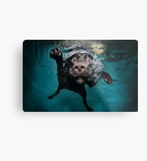Dog Underwater Metal Print