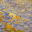 Liquid Gold by Harry Oldmeadow