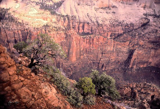 The Colors of Zion's Highcountry by Wayne King