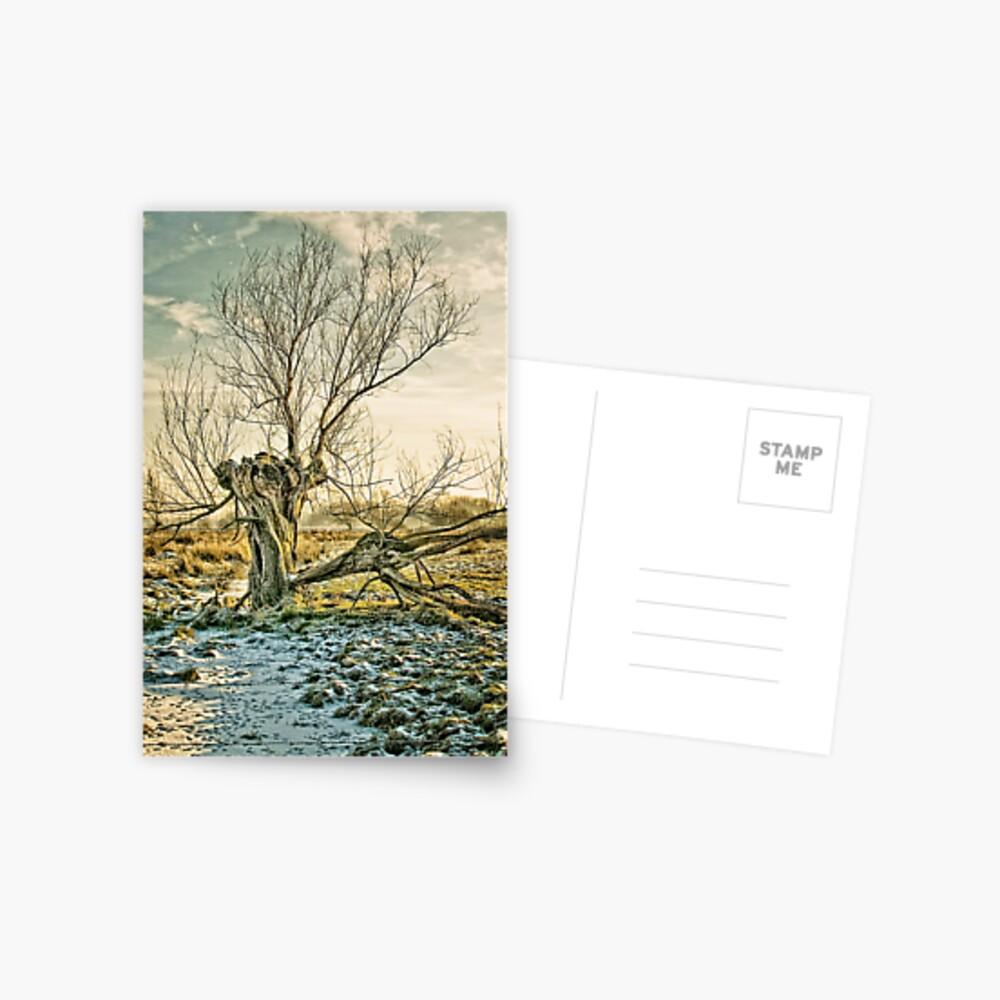split Postcard