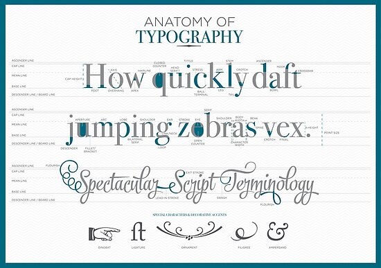 Anatomy Of Typography Posters By Noeldolan Redbubble