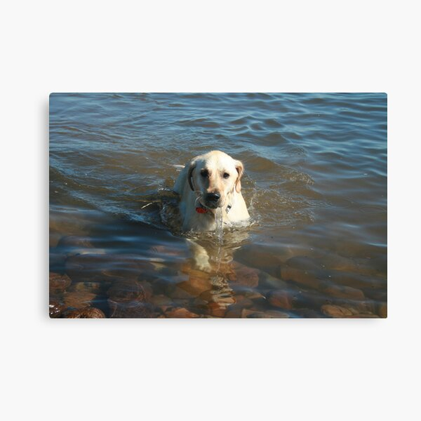 Water-dog. Canvas Print
