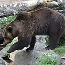 Brown Bear Trails by CreativeEm