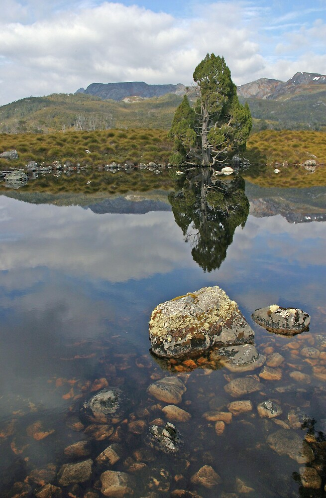 Reflections in the Pool by Ian Robertson