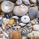 Sea Shell Collection by artsandsoul
