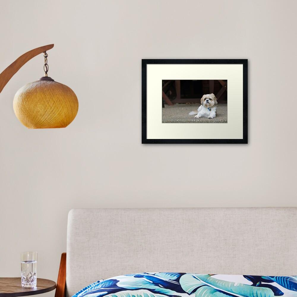 Harry On The Verandah Framed Art Print