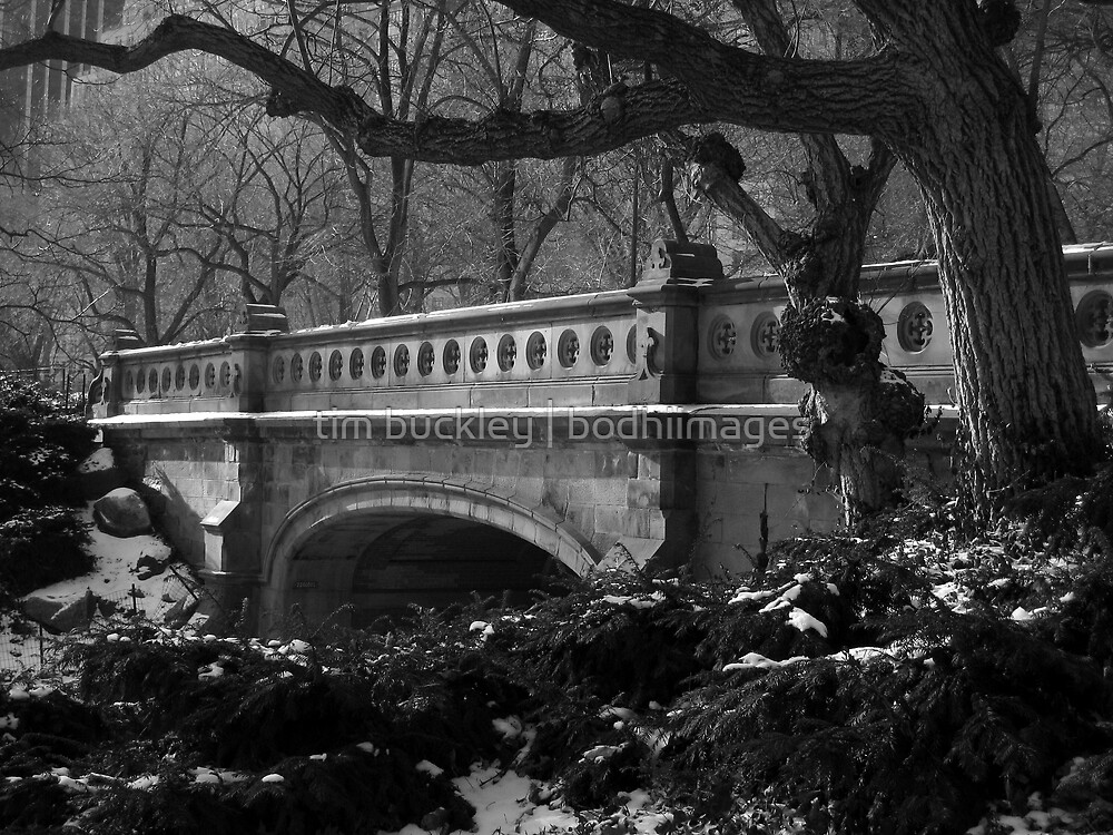 park bridge. central park, nyc by tim buckley | bodhiimages