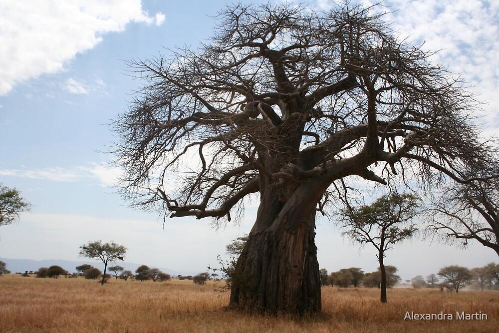 Baobab  Tree by Alexandra Martin