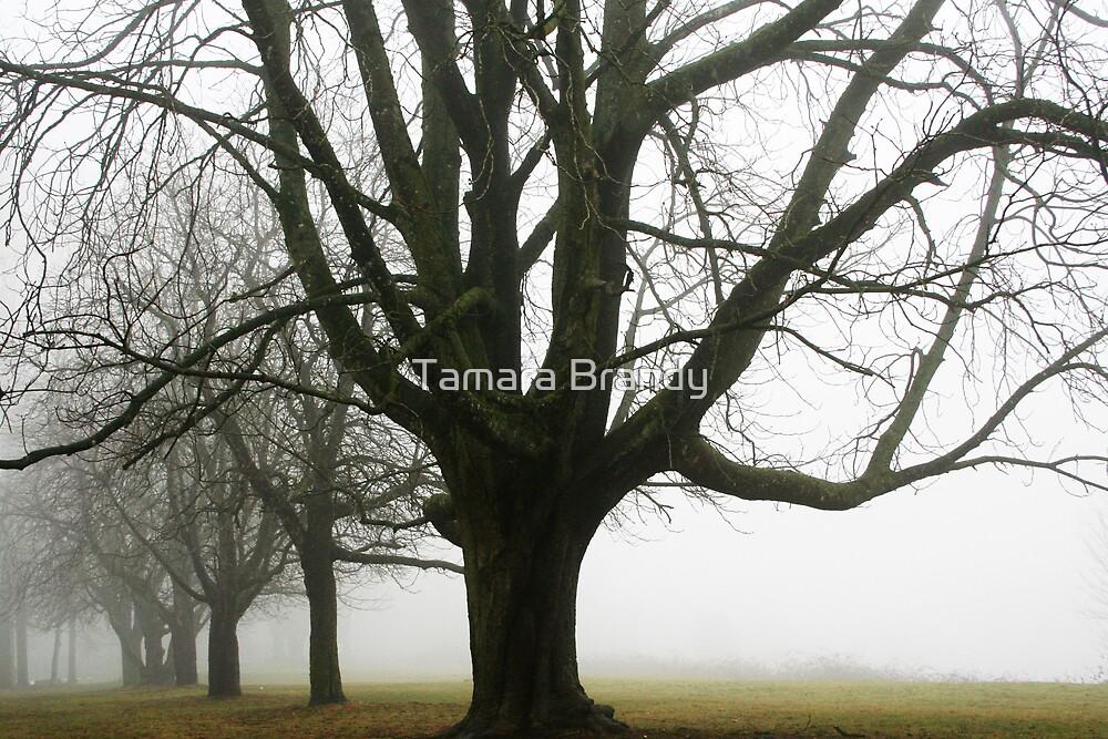 Heritage park trees by Tamara Brandy