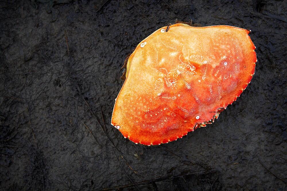 crab shell by Bill vander Sluys