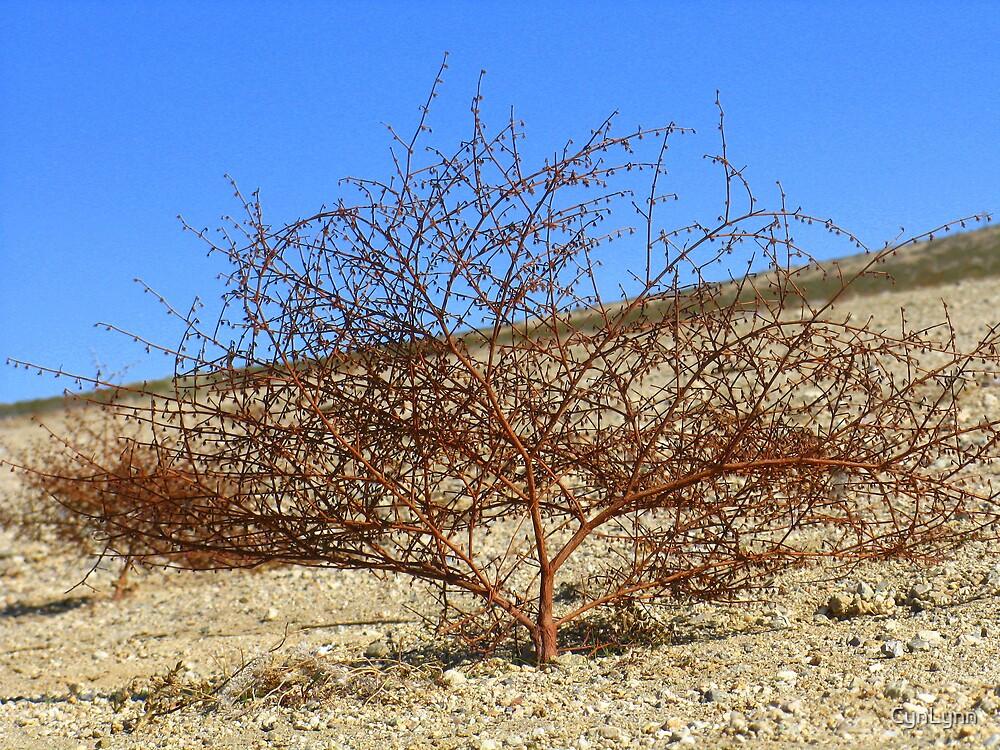 On the Desert Floor by CynLynn