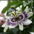 Love is Passion - Flower by Diane Thornton