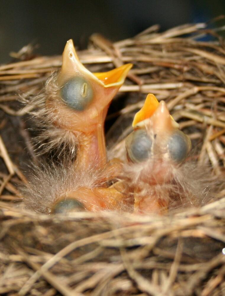 4 Blind Birds by acpolkowski