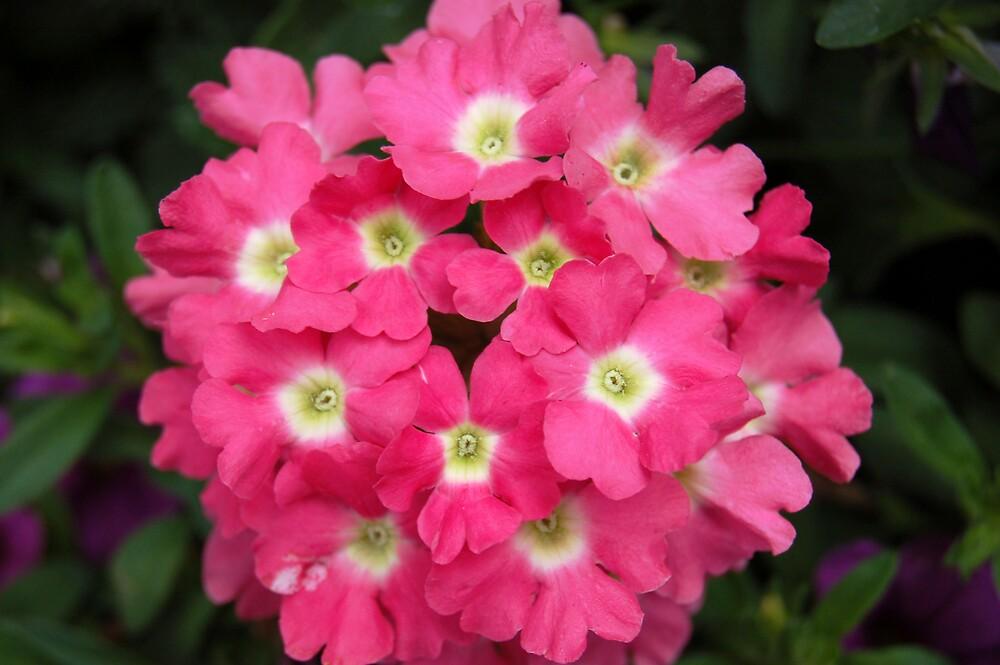 flowers by swimchk512