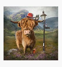 """Highland Cow"" Photographic Print"