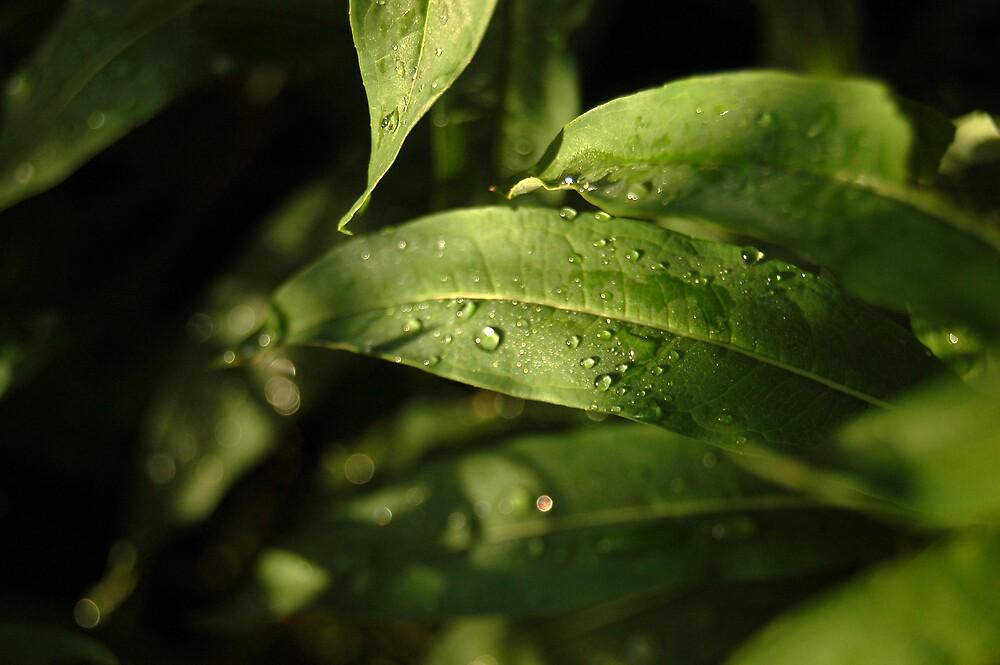 water droplets by swimchk512