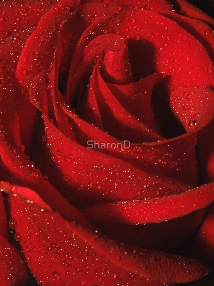Deep Red by SharonD