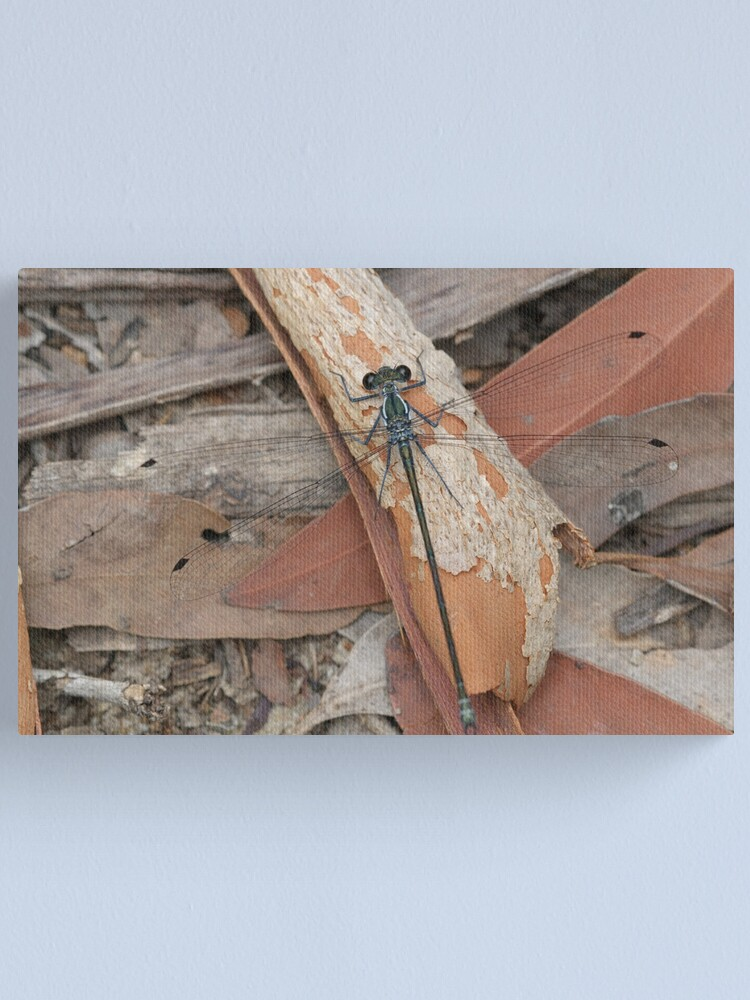 Alternate view of Common Flatwing Damselfly Canvas Print