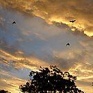 Blue Bird Sky by shanmclean