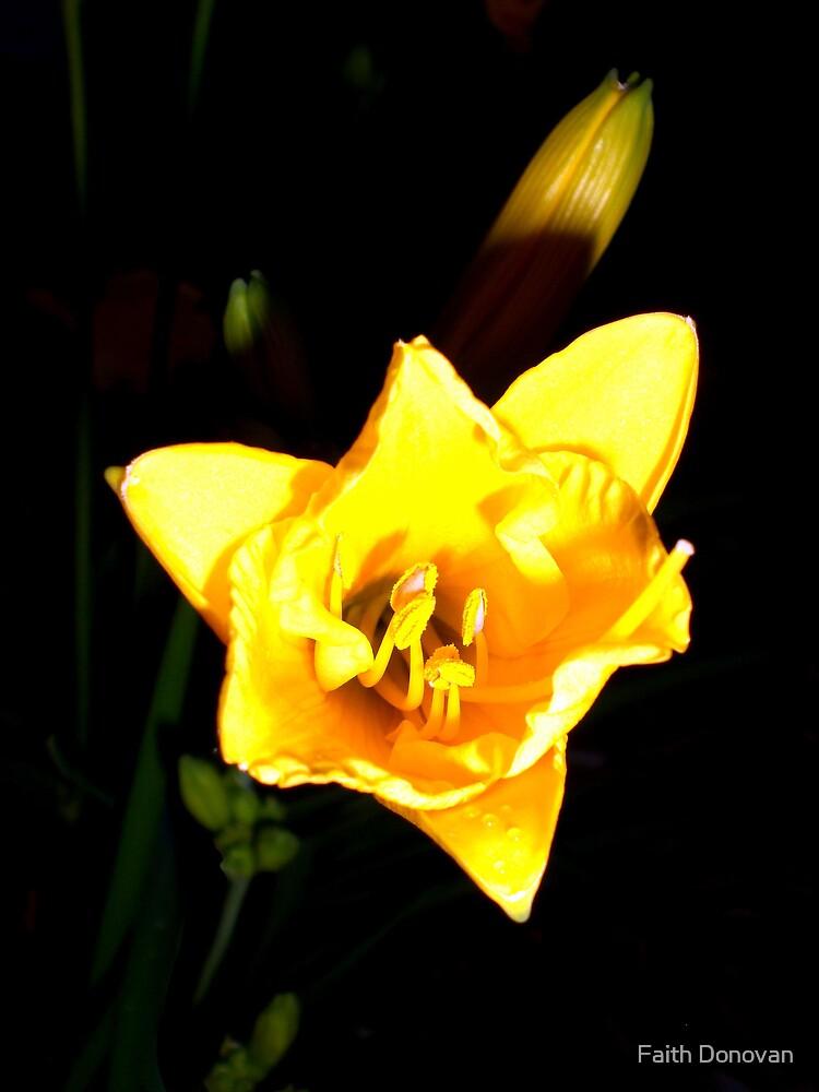 Sunny at Night by Faith Donovan