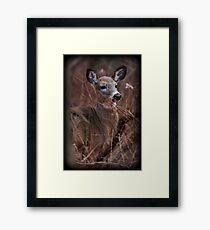 Brush Dweller Framed Print