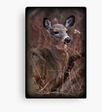 Brush Dweller Canvas Print