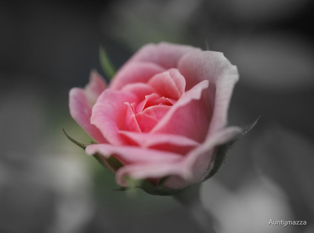 Roselet by Auntymazza