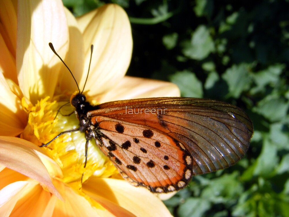 Butterfly freedom by laureenr